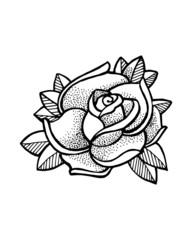 Rose c