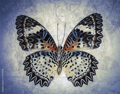 grunge butterfly - 75410146