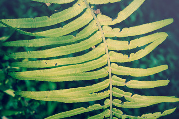 Ferns leaf,nature background.
