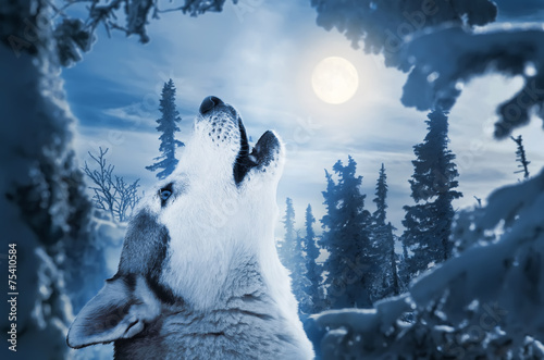 Foto op Canvas Wolf howling to the moon