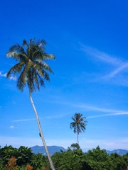 A tall coconut tree at the foreground