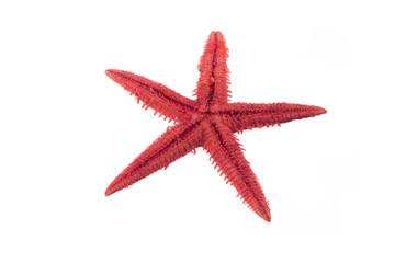Unpeeled red starfish