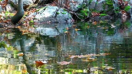 Lake and Autumn Leaves