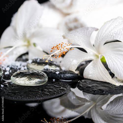 cryogenic spa concept of delicate white hibiscus, zen stones wit © Alisa