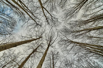 Looking up in the forest