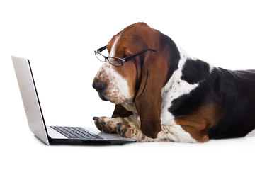 dog working on a computer