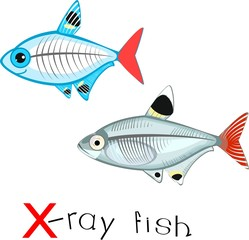 Search photos x ray fish for X ray fish