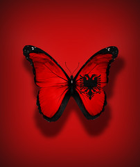 Albanian flag butterfly, isolated on flag background
