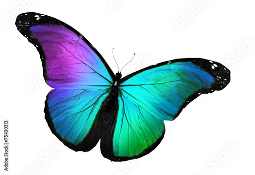 Deurstickers Vlinder Blue butterfly flying, isolated on white