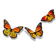 Three orange butterfly, isolated on white background