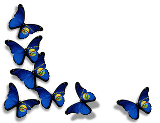 Montana flag butterflies, isolated on white background