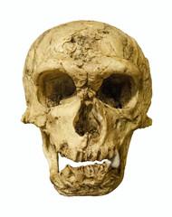 Neandertaler Schädel freigestellt - Neanderthal Skull isolated