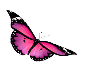 Pink butterfly flying, isolated on white background