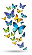 Many color different butterflies flying