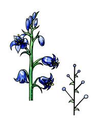Inflorescentia racemus. Botany