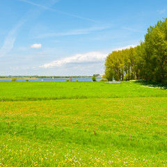 Rhine in Holland