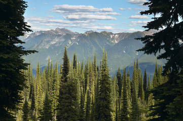 Landscape with forest in British Columbia. Mount Revelstoke. Can