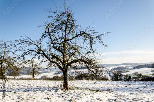canvas print picture Winterlandschaft mit Apfelbaum