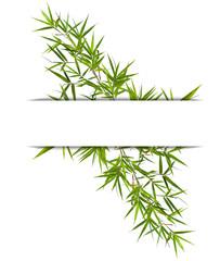 bandeau de bambou