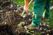 Gardening - man digging the garden soil with a spud - 75449180
