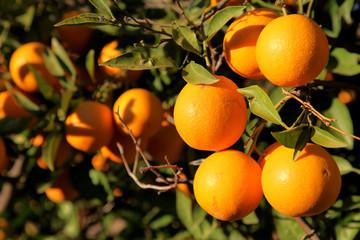 Orange Heaven