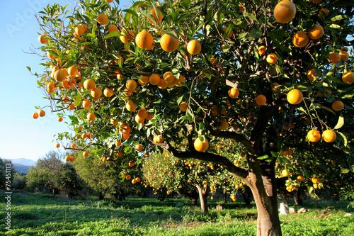 mata magnetyczna Pomarańczowy zbiorów