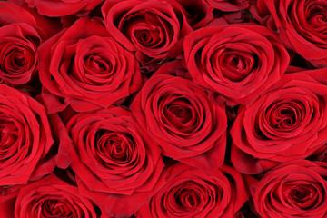 Hintergrund rote Rosen zum Valentinstag oder Muttertag