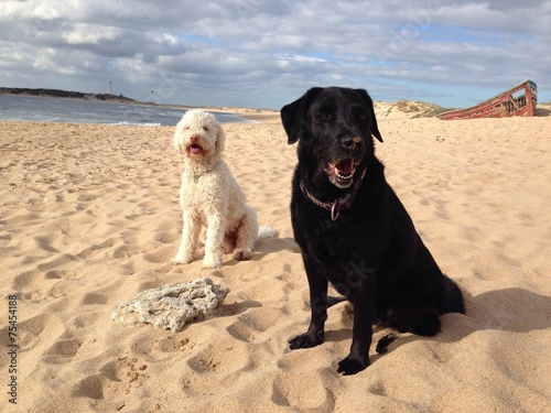 canvas print picture Zwei Hunde am Strand