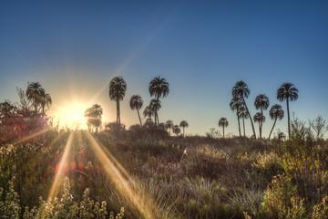 Sunrise on El Palmar National Park, Argentina