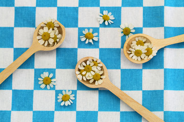 Fresh chamomile flowers on wooden spoons on checkered cloth