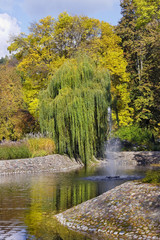 Small pond and weeping willow