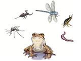amphibians feed poster