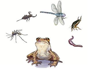 amphibians feed