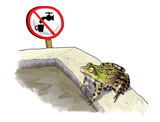 Non-potable water and amphibians poster