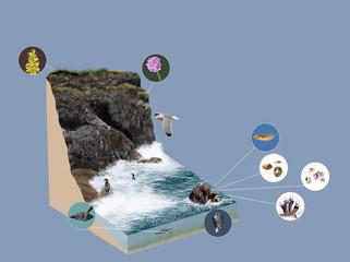 3d model ecosystem cliff