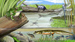 Pond life - 75458161