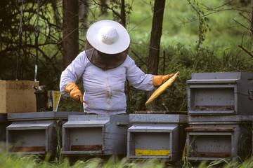 apicoltore impegnato alla raccolta del miele