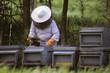 Постер, плакат: apicoltore impegnato alla raccolta del miele