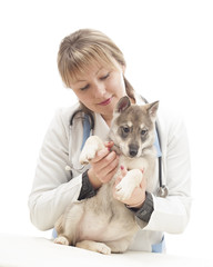 female vet and puppy huskies