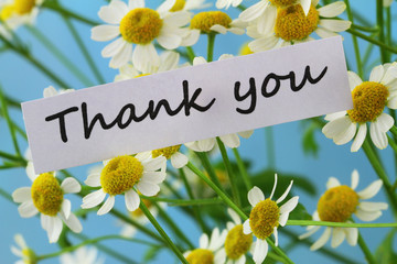 Thank you card with chamomile flowers