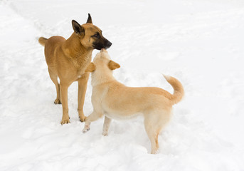 Family of stray dogs on the fresh snow