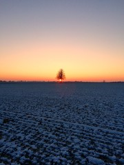 winter sunset with tree