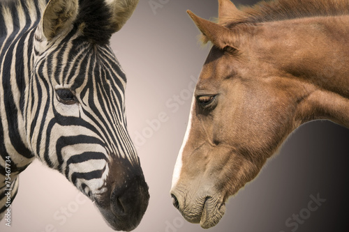 Foto op Canvas Zebra Zebra and horse