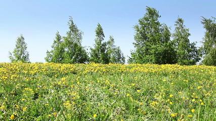 Large group of kids run in dandelion field