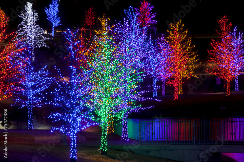 Trees tightly wrapped in LED lights for the Christmas holidays r - 75472386