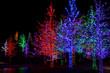 Trees tightly wrapped in LED lights for the Christmas holidays.  - 75472900