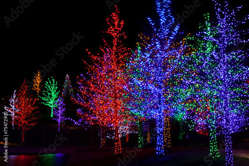 Foto op Plexiglas Verenigde Staten Trees tightly wrapped in LED lights for the Christmas holidays.