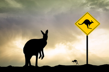 Kangaroo sign caution