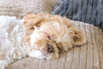 The cute dog is sleeping comfortably on a big soft pillow