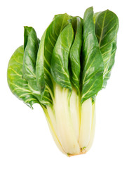 Isolated Chard